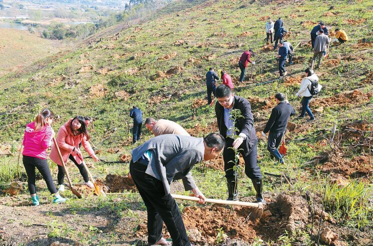 植树造林 厚植绿色发展优势